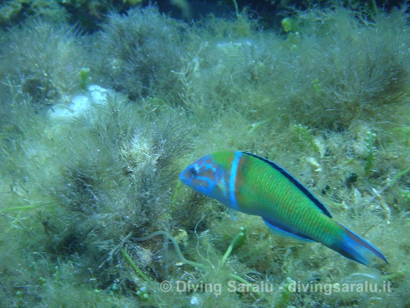 L 39 acquario dell 39 isola d 39 elba for Acquario 250 litri